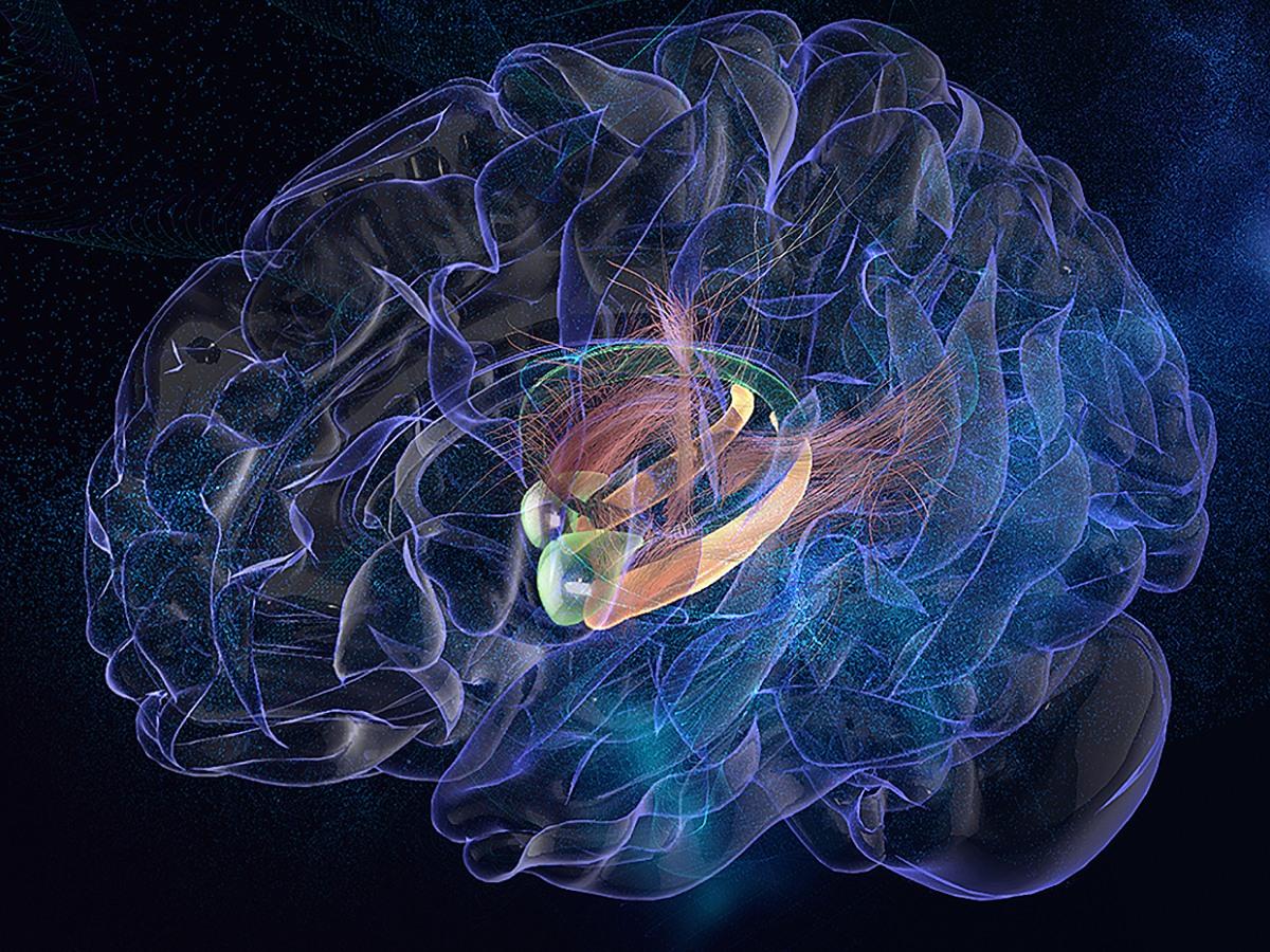 Duygular doğuştan mı gelir yoksa öğrenilir mi?