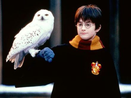 Hedwig – Harry Potter